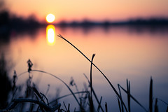 Aquadrome (shilbill) Tags: sunset sun reed grass 35mm golden bokeh f22 goldenhour rickmansworth aquadrome 35mmf18 d3100 nikond3100