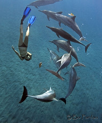 Leina and friends (explored) (bodiver) Tags: hawaii dolphin ambientlight wideangle freediving kealakekua fins naia underwatermodel
