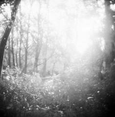 7 (jhb123) Tags: trees blackandwhite bw film nature woodland ir holga lomo infrared rolleiir400