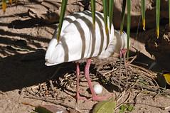 Eurasian Spoonbill with egg (Truus & Zoo) Tags: espaa animals zoo spain fuengirola dierentuin lepelaar platalealeucorodia eurasianspoonbill esptulacomn leastconcern