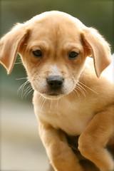 Eva (Animal Ark Rescue)