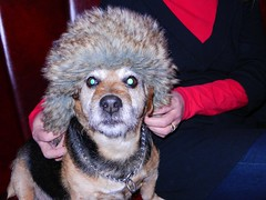 Looking Like Their Owner (NikWatt) Tags: winter pets snow dogs weather animals scotland hats tesco handheld portobello alfie headwear owners joppa edinburghphotographers theormelie