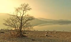 Alone at the lake (Captain Nikon) Tags: longexposure lake lakedistrict peaceful cumbria serenity derwentwater sigma1020mm lonesometree nikond90 flickrandroidapp:filter=none