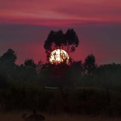 5:30am - the outback (Fat Burns ☮) Tags: sun sunrise landscape dawn outback treeline outbackaustralia theoutback queenslandoutback fleursetpaysages lelitedespaysages rememberthatmomentlevel4 rememberthatmomentlevel1 rememberthatmomentlevel2 rememberthatmomentlevel3 magaleriespéciale luciestopgallery