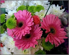 Supermarket Blooms ... (* Janets Photos *) Tags: uk pink flowers white green flora blooms masterphotos afotando artisticflowers takenwithlove superstores exquisiteflowers mindigtopponalwaysontop lovelyflickr thegoldenachievement goldenachievement dreamlikephotos