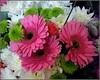 Supermarket Blooms ... (** Janets Photos **) Tags: uk pink flowers white green flora blooms masterphotos afotando artisticflowers takenwithlove superstores exquisiteflowers mindigtopponalwaysontop lovelyflickr thegoldenachievement goldenachievement dreamlikephotos