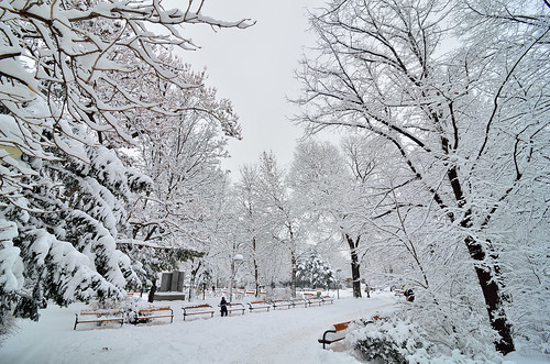 vienna wien park christmas winter snow tree austria nieve invierno viena mygearandme mygearandmepremium mygearandmebronze mygearandmesilver