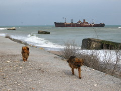 Two doggies, three casemates and Evanghelia (Radu Bucuta) Tags: shipwreck romania litoral evanghelia costinesti mareaneagra 2013 epava