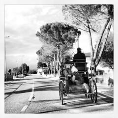Calesse (Cristina Birri) Tags: road blackandwhite bw man dogs blackwhite bn campagna gita viaggio bianconero biancoenero cani calesse flickrandroidapp:filter=none