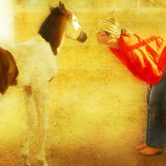 On a golden bright day a colt was born2 (MixedUpMedia/Mari W) Tags: digitalart horse colt foal quarterhorse pinto paint apha americanpainthorseassociation cowgirl womanandhorse womanandcolt animals girl vacation summer cute 1001nights flickraward graphicmaster 1galleries