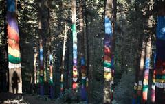 Bosque pintado de Oma (Sitoo) Tags: bosque pintado oma sombra colores 50mm naturaleza arte silueta