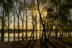 gold shadows. (gaston torre .) Tags: sol oro luz light trees arbol shadows landscape lake lago atardecer sunset