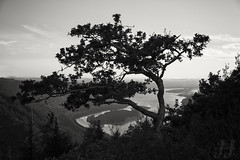 Keeper of Angel's Rest (Joshua Johnston Photography) Tags: angelsrest tree oregon pacificnorthwest pnw columbiarivergorge nature landscapephotography blackandwhite bnw joshuajohnston canon6d canonef2470mmf4lisusm