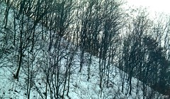20160120 - Triangularity (will5967) Tags: will5967 willhoover photography south korea winter triangularity triangles diagonal trees stark abstract
