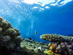 Carguero hundido del Mar Rojo - MillionHope (albastandby) Tags: reef redsea marrojo buceo fish scubadiving