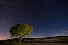 JOS_3039w (Josune2003) Tags: rbol estrella nocturna linterna luna