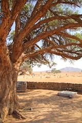 IMG_8982 (Couchabenteurer) Tags: namibia sossusvlei campingplatz campground