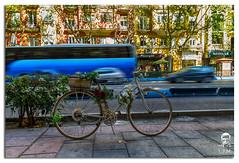 En Madrid 7. (luissnchezmolina) Tags: trafico bicicleta espaa spain flores bike