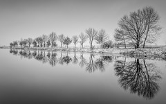 Reflections (Jaques10000) Tags: nikon d5100 havelland landscape seascape landschaft water reflections trees winter monochrome blackwhite