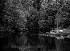Lush Rivershore (bjorbrei) Tags: trees forest river shore rivershore water reflections akerselva kjelss oslo norway