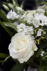 White roses close up (jetro.inocando) Tags: white nature fresh beauty rose anniversary love perfection flower floral purity cultivated ornamental fragrance blooms