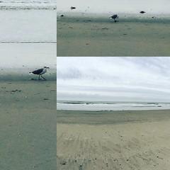 AC ala Instagram (jennabee25) Tags: atlantic city atlanticcity instagram