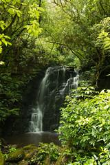 IMG_4409.jpg (Amy:)2009) Tags: newzealand southisland otago catlins mataifalls