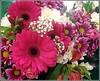 Something to Brighten up Your Day. (** Janets Photos **) Tags: flowers supermarkets masterphotos artisticflowers takenwithlove coloursbrightness lovelyflickr ukhull thegoldenachievement goldenachievement