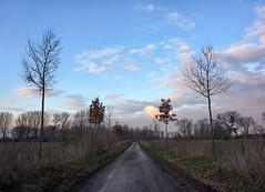 Winter Walk (*Gitpix*) Tags: trees winter sky cloud nature clouds germany way landscape deutschland day cloudy path walk sony natur himmel wolke wolken naturereserve landschaft bume baum duesseldorf weg spaziergang pfad naturschutzgebiet himmelgeist sel1855 sonynex7 sonysel18551855mm