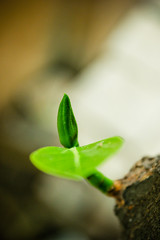 Greeny (Clicks Clicks) Tags: green nature bud jackfruit