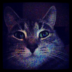 #good #night #cat (ChestnyStarik) Tags: square squareformat iphoneography instagramapp xproii uploaded:by=instagram
