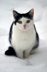 cat in the snow (nic_r) Tags: snow cat kitty