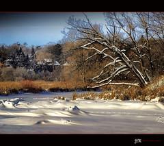 Frozen Land.. (J Montero) Tags: trees snow ice frozen rememberthatmomentlevel1