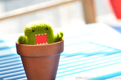 Watch out, Mario! (WindUpDucks) Tags: flower pot domo qee grassy toy2r
