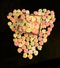 Happy Valentine's Day (A Great Capture) Tags: happy day valentines ald ash2276 ashleyduffus ashleylduffus wwwashleysphotoscom