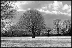 Open Fields {Explore!} (majestiele) Tags: trees light blackandwhite bw sun black tree monochrome clouds landscape lone infraredlook 5dmkiii