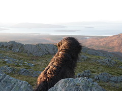 Dougal air Beinn Aslaig (Màrtainn) Tags: dog chien skye cão cane scotland highlands isleofskye alba hond escocia panasonic perro hund pies kutya labradoodle alban szkocja hundur suns pes escócia dougal schottland schotland ecosse anjing scozia kopek skottland собака koira skotlanti skotland koer broskos šuo câine escòcia anteileansgitheanach skócia albain beinnaslaig iskoçya cù шотландия σκωτία σκύλοσ gàidhealtachd eileansgitheanach scoţia fz48 dmcfz48 panasonicfz48 panasonicdmcfz48