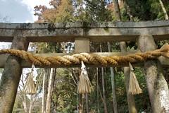 Ryuufuku Shrine 4 (KyotoDreamTrips) Tags: japan kyoto ume plumblossomfestival   aodanibairin joyocity munenagashinno nakatenmanjinja ryuufukushrine
