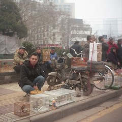 (wisze) Tags: china winter 6x6 tlr film kodak seagull porta  nanjing    midformat middenformaat