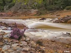 Colores en el rio Odiel (Pedrali) Tags: flores agua huelva colores calañas pedrali rioodiel rutadelosmolinos olympuse3 zuiko1260mm kedadahuelvaysusfotógrafos