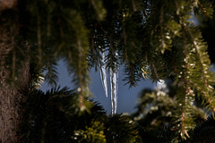Ice, naturally framed (Ben Lockwood) Tags: snow alps canon iso icicle f56 courchevel 70200m 40d