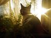 (icantstopchasingyou) Tags: sunset fern drape kenny kenneth lacecurtain lightthroughwindow babykenny