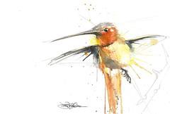 stretch (Jennifer Kraska) Tags: orange bird watercolor hummingbird jennifer free kraska
