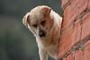 Perrito (marathoniano) Tags: dog chien naturaleza art nature arte natura perro albacete castillalamancha ayna marathoniano natureandpeopleinnature ramónsobrinotorrens