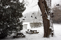67/365 : 2013 (Kerrie Lynn Photography (Sugaree_GD)) Tags: winter snow birds outside outdoors flying flight scared spooked project365 365days 2013 apicaday 67366 sugareegd 030813 shuttersisters365 3652013 photojournaloflife 2013yip 2013inphotos pad2013365