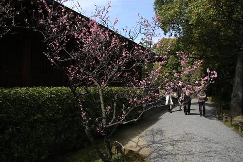 春ー城南宮