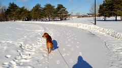 Get Lucky 7K (Jon & Brigid) Tags: winter dog cold ice minnesota race goldenretriever golden downtown minneapolis running run retriever theo mn theodore mols getlucky getlucky7k