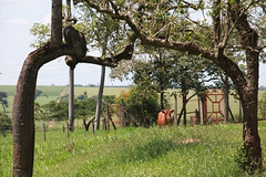 "FAZENDA DA GRAMA (6) • <a style=""font-size:0.8em;"" href=""http://www.flickr.com/photos/92263103@N05/8570108988/"" target=""_blank"">View on Flickr</a>"