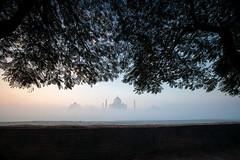 Taj Mahal and tree branches at dawn, Agra