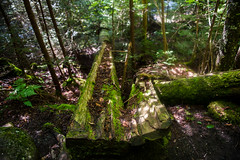 open to change (nardell) Tags: trees summer ny mountains tree nature forest moss woods hiking mountainclimbing adirondacks upstateny adk keenevalley fallentrees